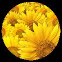 manipura-chakra-yellow-flowers.jpg