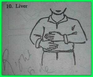 10-liver-1.jpg
