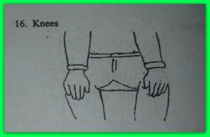 16-knees.jpg