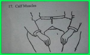 17-calf-muscles.jpg
