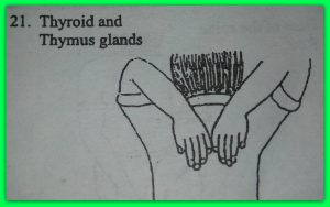 21-thyroid-thymus.jpg