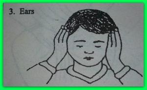 3-ears.jpg