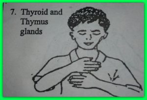 7=thyroid-and-thymus.jpg