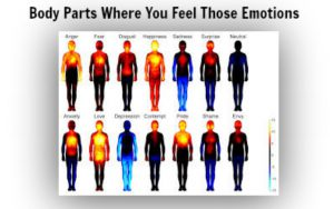 body-parts-and-related-emotions.jpg