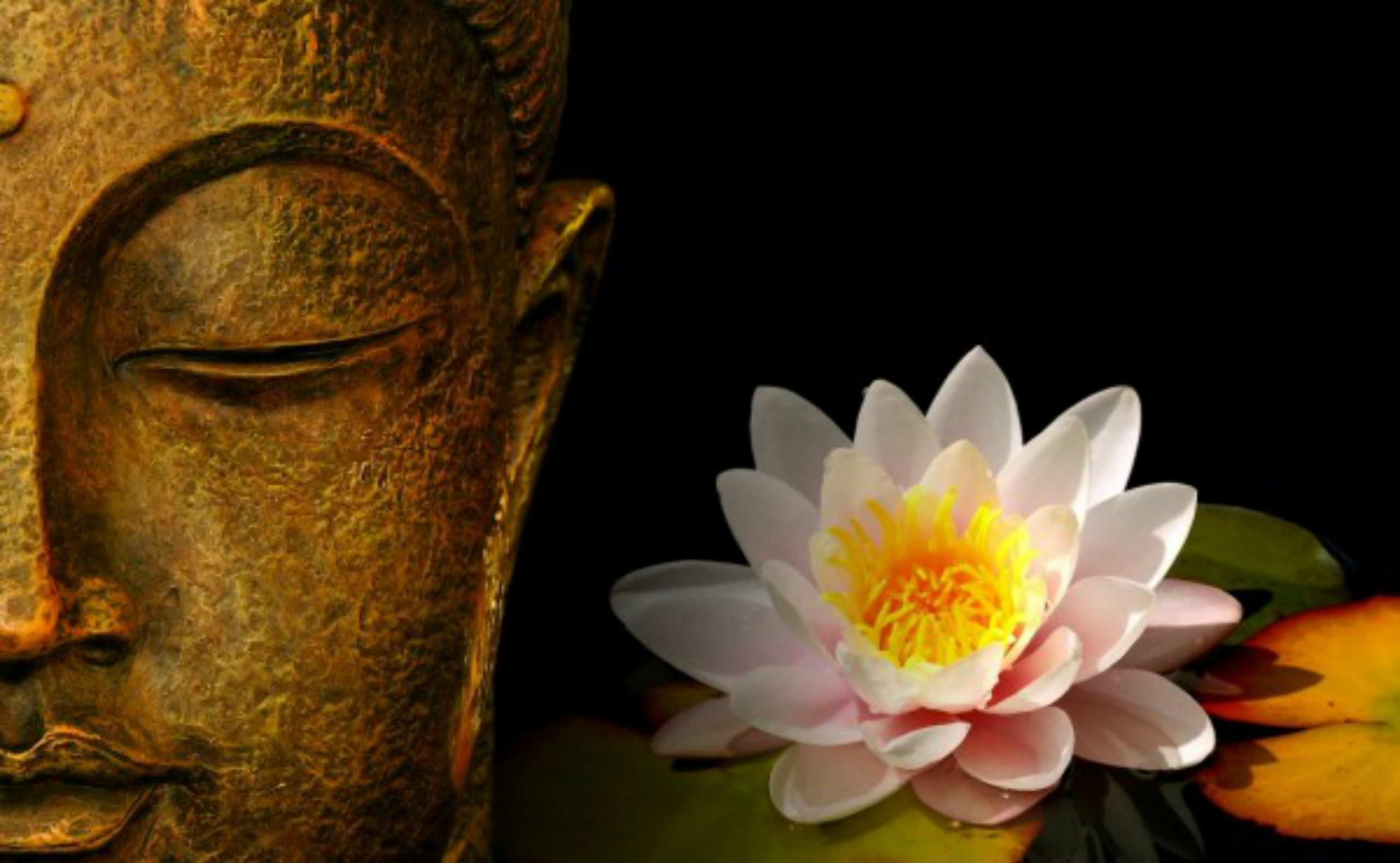 BUDDHA-LOTUS-LIGHT.JPG
