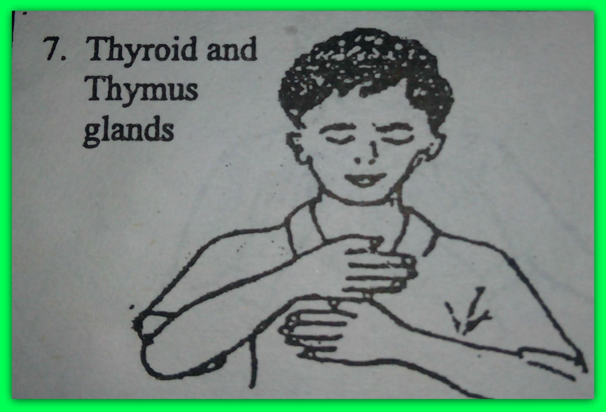 thymus point