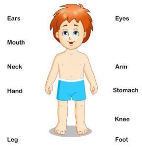 body-parts
