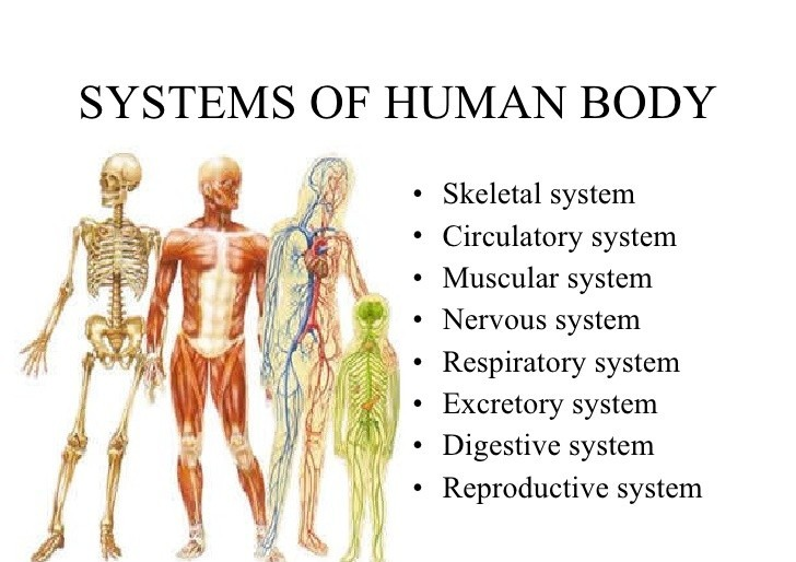 Different Human body systems
